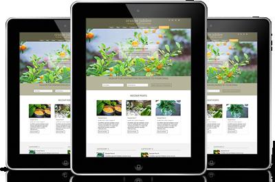 Which blog design service should I choose